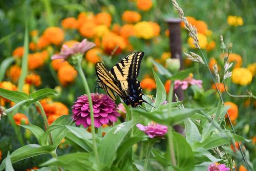 Picture of butterfly on flowers